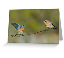 Courting Bluebirds Greeting Card
