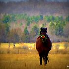 Ranch horse by francelal