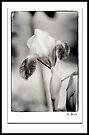 Iris in Black & White by KBritt