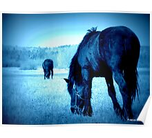 Love Horses Poster