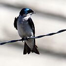 Bird on a Wire... by RichImage