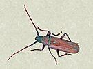 Longhorn Beetle - Cerambycidae by MotherNature