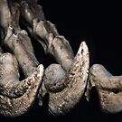 Claw of Deinocheirus Gobi Mongolia arms 2.4 m 20-30 cm 65-95 m yrs ago 1983 01010007  by Fred Mitchell