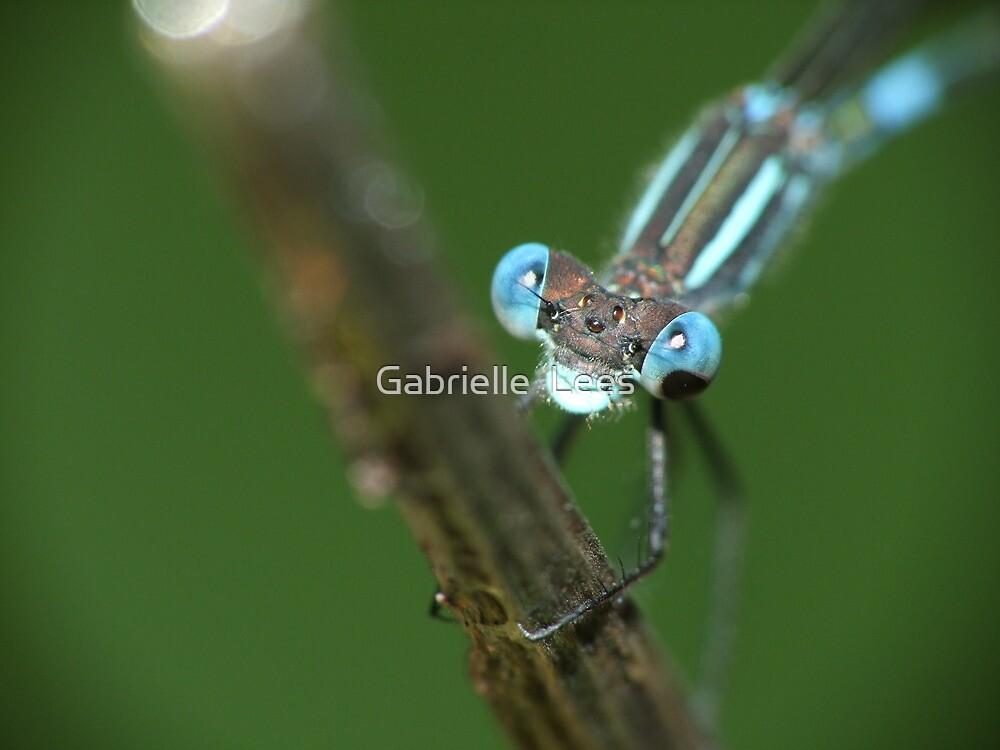 Blue Damsel by Gabrielle  Lees