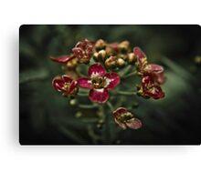 Flower Blossoms Canvas Print