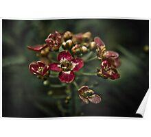 Flower Blossoms Poster