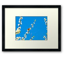 Perched and pretty Framed Print