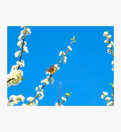Perched and pretty Photographic Print