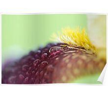 Rainy flower petal detail iris macro  Poster