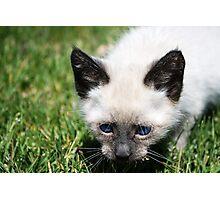 Stanton the Kitten Photographic Print