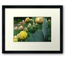 Neighborhood Cactus  Framed Print