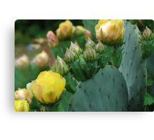 Neighborhood Cactus  Canvas Print