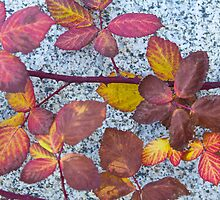Leaves and Granite by John Butler