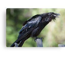 Crow Canvas Print
