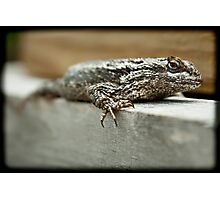 Texas Spiny Lizard Photographic Print
