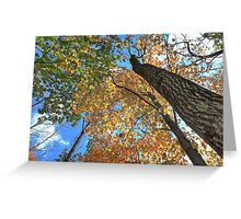Colorful Autumn Treetop Canopy Greeting Card
