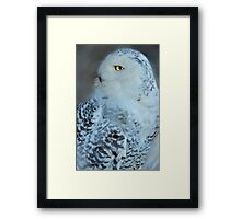 Great White Owl Framed Print
