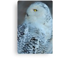 Great White Owl Canvas Print