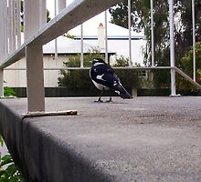 Bird on the Steps of the Flats by Robert Phillips