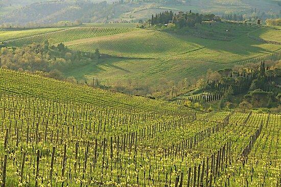 Panzano- Chianti by gluca