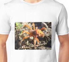 An orb spider perhaps Unisex T-Shirt
