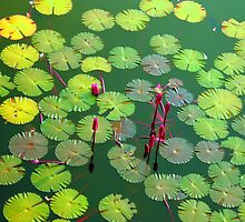 Lotus Pond by AIM  TO BE AIMLESS