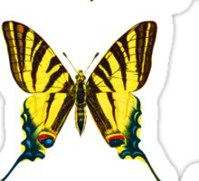 Butterfly Collection			 Sticker