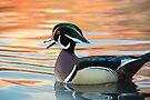 Wood Duck by Eivor Kuchta