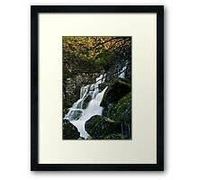 Lower Fagus Forest Falls Framed Print