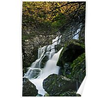 Lower Fagus Forest Falls Poster