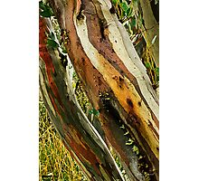 Colours of Wood Photographic Print