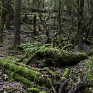 Mt Field National Park - Moss by Anthony Evans