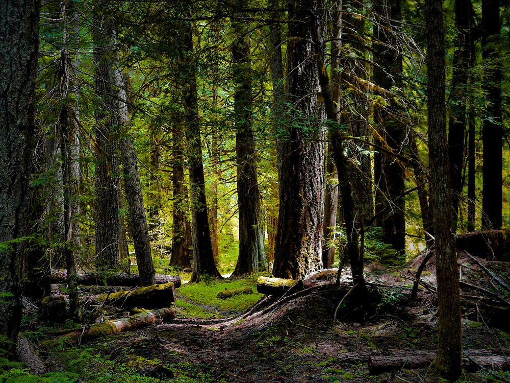 A Walk In A Cool Place by Charles & Patricia   Harkins ~ Picture Oregon
