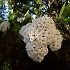 Unknown White Bush by Sensei1953