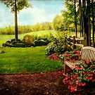 My Cousin's Garden by Susan  Kimball