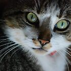 Portrait of cat by flashcompact