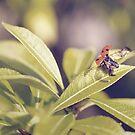 Vintage ladybird by Julie McBrien