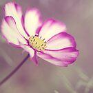 Vintage Pink by Julie McBrien
