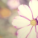 Vintage Flower by Julie McBrien