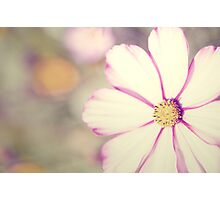 Vintage Flower Photographic Print