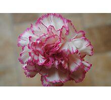 Dainty Pink Trim Photographic Print