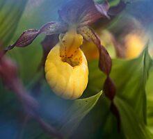 Lady Slipper hiding by Chris Kiez