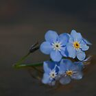 Forget-me-nots forgotten... by Chris Kiez