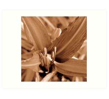 Garden Daylily in Sepia Art Print