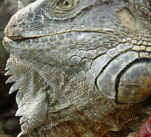Red Iguana by Guatemwc