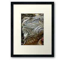 Red Iguana Framed Print