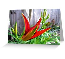 First Bloom - Daylily2 Greeting Card
