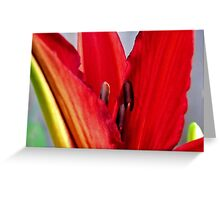 First Bloom - Daylily5 Greeting Card