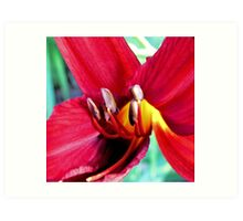 First Bloom - Daylily6 Art Print