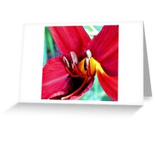 First Bloom - Daylily6 Greeting Card